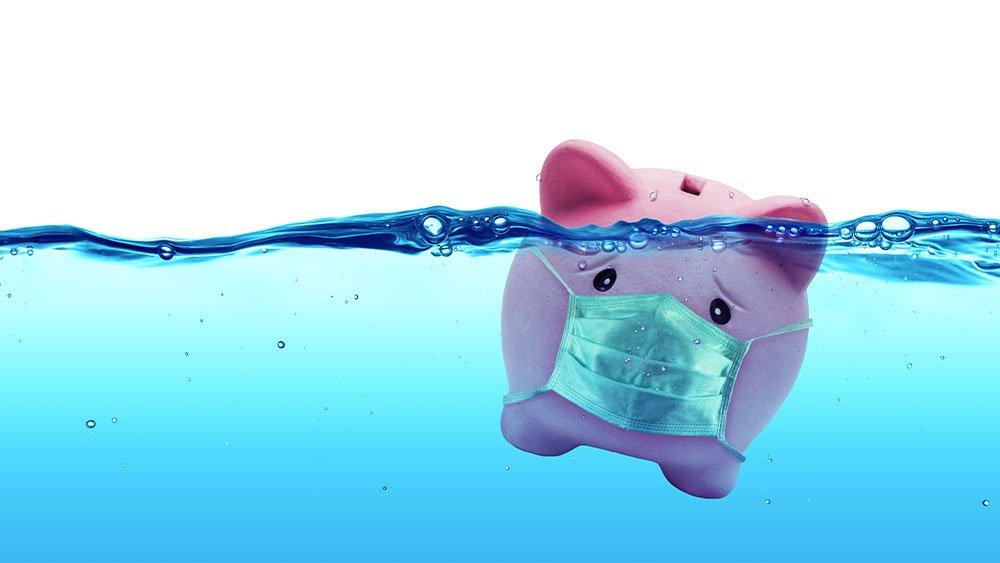 pig in water